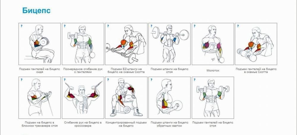 упражнения в зале для сжигания жира мужчинам