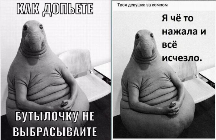 memes 2017 8